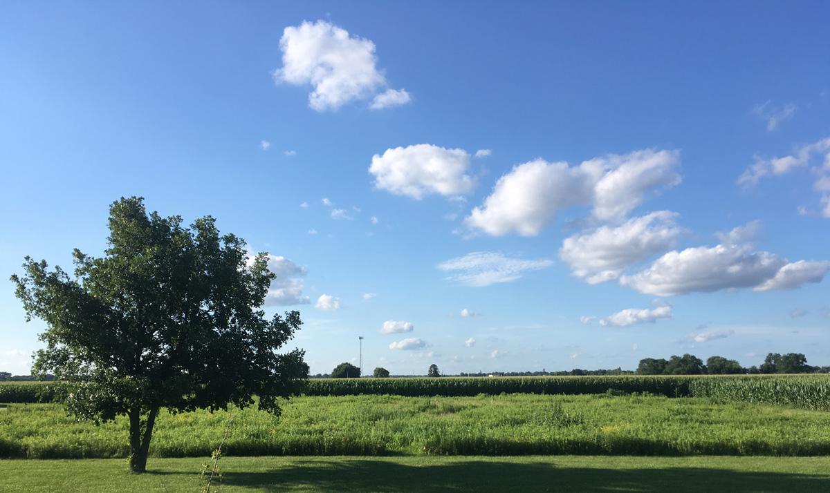 ALUUC prairie restoration area, Springfield, IL